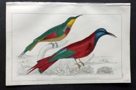Goldsmith 1851 Hand Col Bird Print. Red Winged & Blue Headed Bea Eater